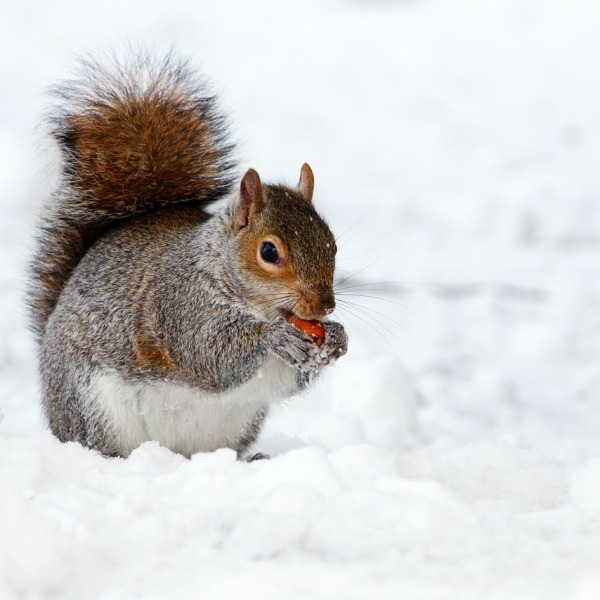 Squirrels collect and store nuts so they'll have food to last through winter. Trade show visitors prepare well to make the most of their visit. Some might even want to bring some food.