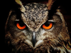 In the West, the owl is commonly considered a wise, silent and solitary bird of prey.